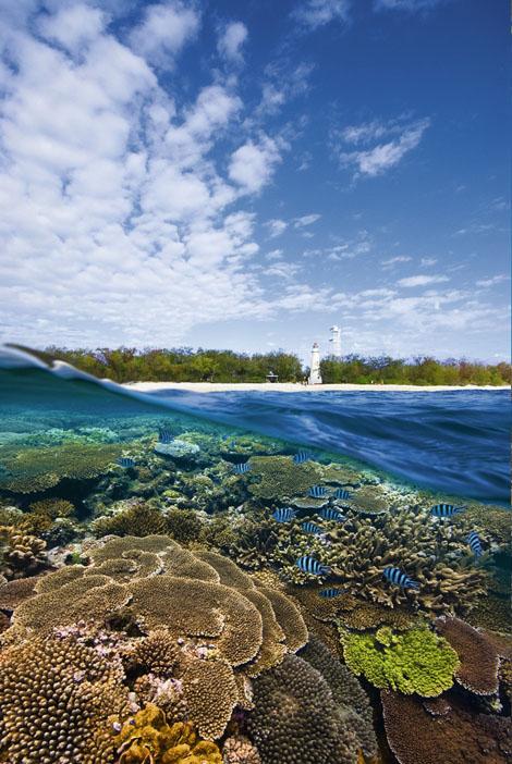 Lady Elliott Island Eco Resort has won numerous awards for its sustainability initiatives.