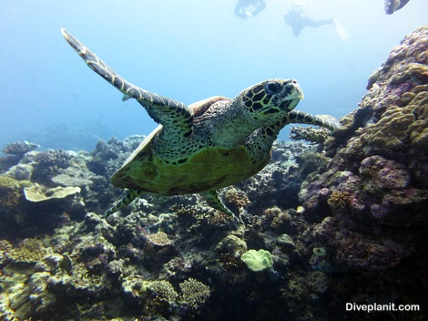 The Great Barrier Reef is home to a range of protected species including endangered marine turtles and dugongs. It is simply too precious for us to lose.