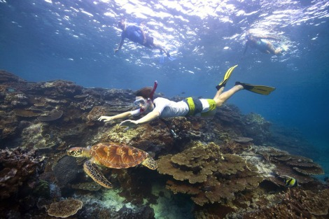 Snorkelling, Lady Elliot Island. Visibility could be drastically reduced on the reefs south of Gladstone as a result of dumping.